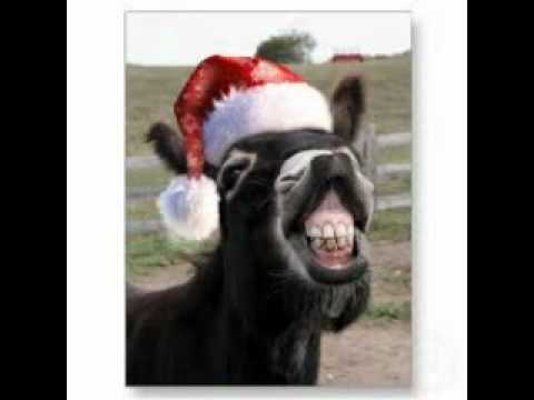 dominick the donkey the italian christmas donkey lyrics sung by aaronstamp