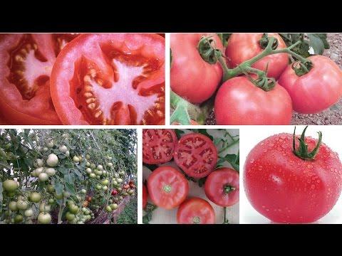 Раннеспелые розовоплодные томаты от бренда Sakata