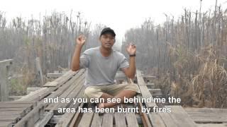 Borneo is burning!