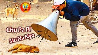 Big Horn vs Prank Sleep Dog Super Funny -  Chu Pa Pi Mu Na Nyo Prank Dog Challenge Try Not to Laugh
