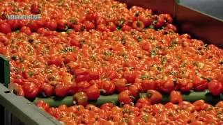 Video Best Tomato Farming & Modern Agricultural Innovation Technique download MP3, 3GP, MP4, WEBM, AVI, FLV Maret 2018