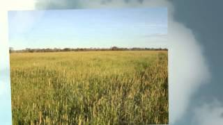 Commercial Farms And Farmland For Sale In Sao Paulo Brazil