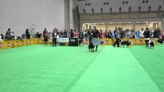 FCIアジアインタードッグショー2014 ボーダーコリーレクサス審査.