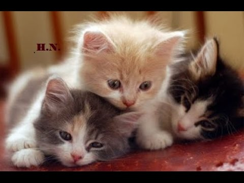 Sweet Music to Sleep Restless Baby Pets ♫ Beautiful Calming Music for Kittens and Puppies