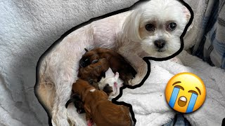MY DOG GAVE BIRTH! *Meet The Puppies*