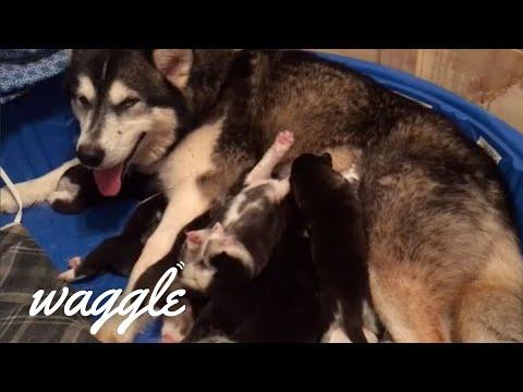 Animal Moms | Adorable Animal Compilation
