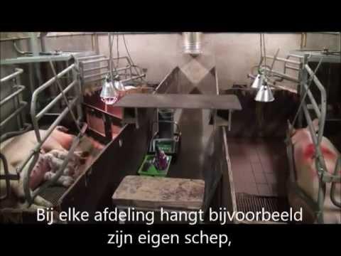 Verslag stage op de Hemelumerhoeve door de duitse Hanna via Top Agrar