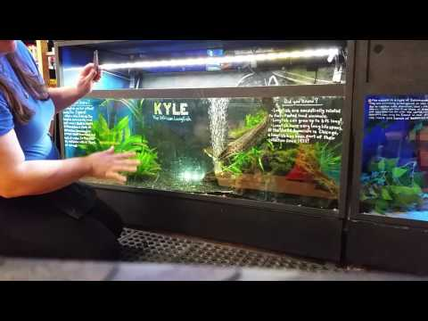 Advanced Lungfish Husbandry: Feeding Kyle