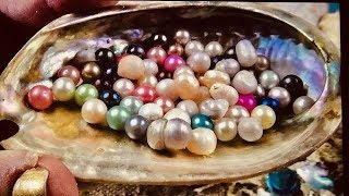 50 REAL OYSTER DIG IT KITS WITH REAL PEARLS.. AMAZING ON FUN HOUSE TV