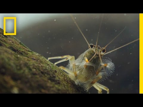 Thanks to Shrimp, These Waters Stay Fresh and Clean | Short Film Showcase thumbnail