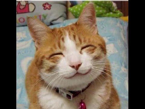 Лучшие демотиваторы - смешные картинки про котов! - YouTube