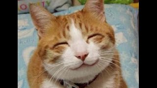 Лучшие демотиваторы - смешные картинки про котов!