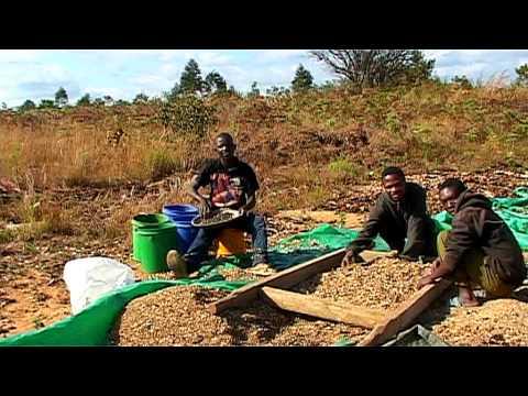 Kibidula Farm, Iringa, Tanzania 2009