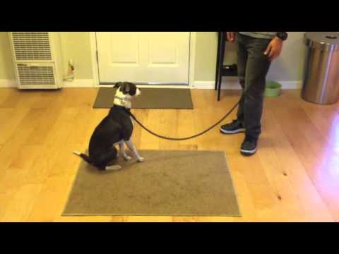 The Good Dog Minute 3/31/13: Turning aggression problems around in minutes.