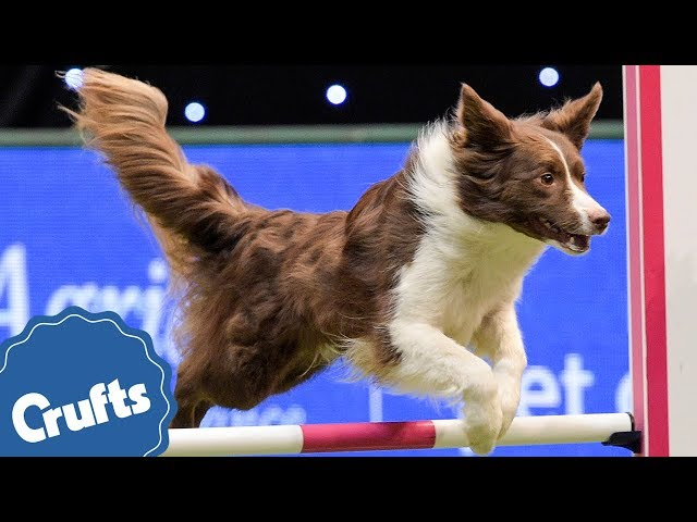 We're Celebrating 40 Years of Agility at Crufts 2018!!