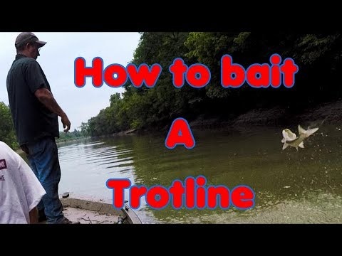 How To Bait Out A Trot Line