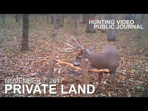 Private Land: Nov. 7 - Buck Encounters, Legendary Bowhunter tags an Iowa Buck | The Hunting Public