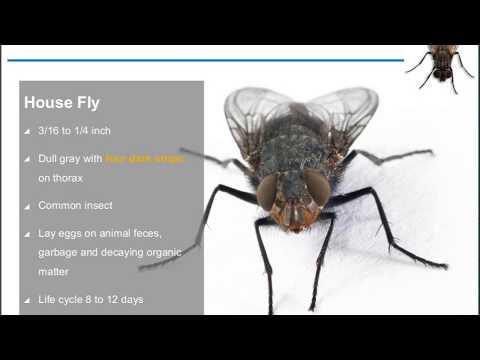 Food Safety Matters Webinar, June 2017 - Large Flies