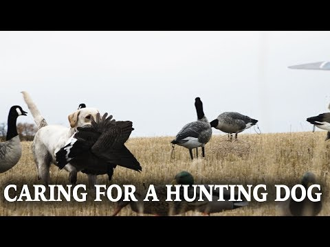 Caring For A Hunting Dog