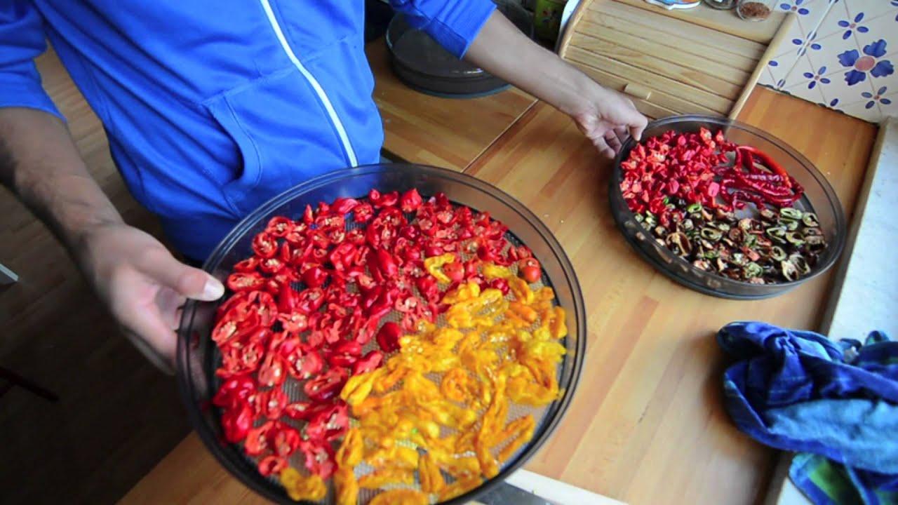 come conservare ed essiccare i peperoncini pi piccanti
