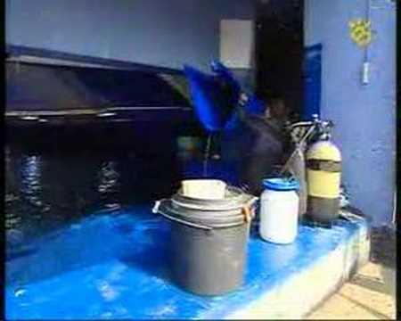 tiburones palma aquariun fidel careaga
