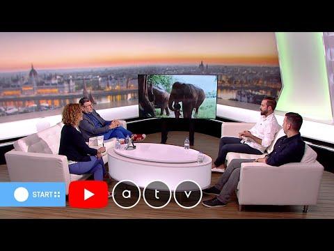 Szolgalelkű óriások: Egy különleges dokumentumfilm az elefántokról thumbnail