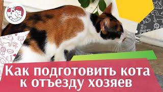 4 совета, как подготовить кошку к отъезду хозяина в отпуск, на ilikepet