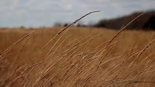 Strong Gusty Winds Howling 1 Hour Nature Sounds / Deep Sleep / Relaxation / Meditation / Asmr
