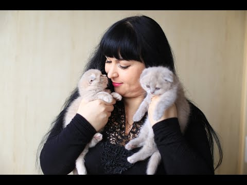 Отравления у кошек / Причины , Cимптомы  и Лечение