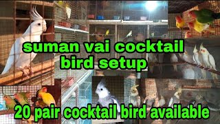 Sumon vai cocktail bird breeding setup  visit   budgies & cocktail available   cocktail bird setup