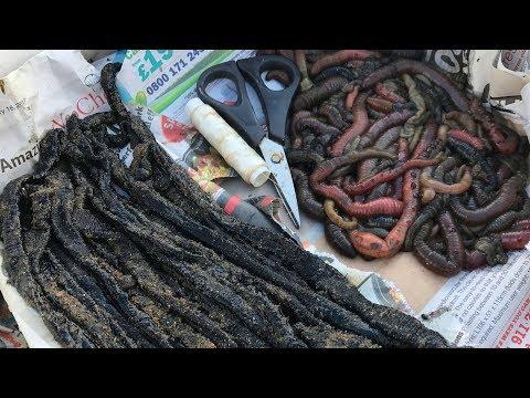 Beach Fishing BAIT CHALLENGE - Fresh Worm V Frozen Worm!