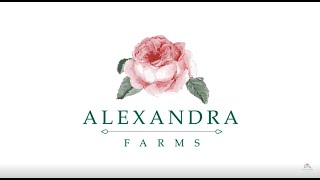 Who We Work With: Designers Using Alexandra Farms Garden Roses (2019)