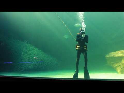 Diver communication system at the Two Oceans Aquarium