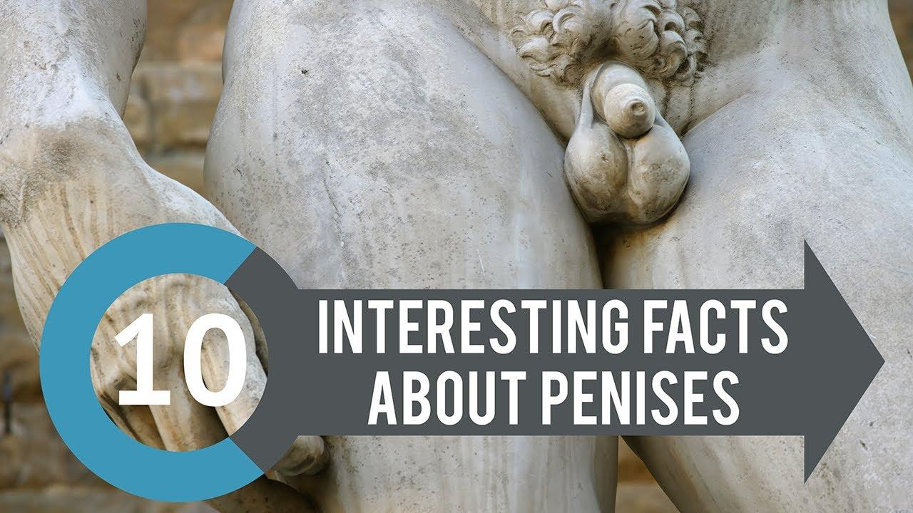Intreguing penis