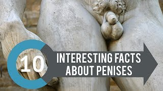 10 Interesting Facts about Penises