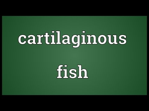 Cartilaginous Fish Meaning