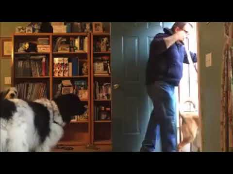 "Using the ""wait"" command to get safely out the door (with four BIG dogs!)"