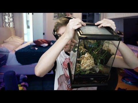Chance letting 1500 ladybugs into a terrarium