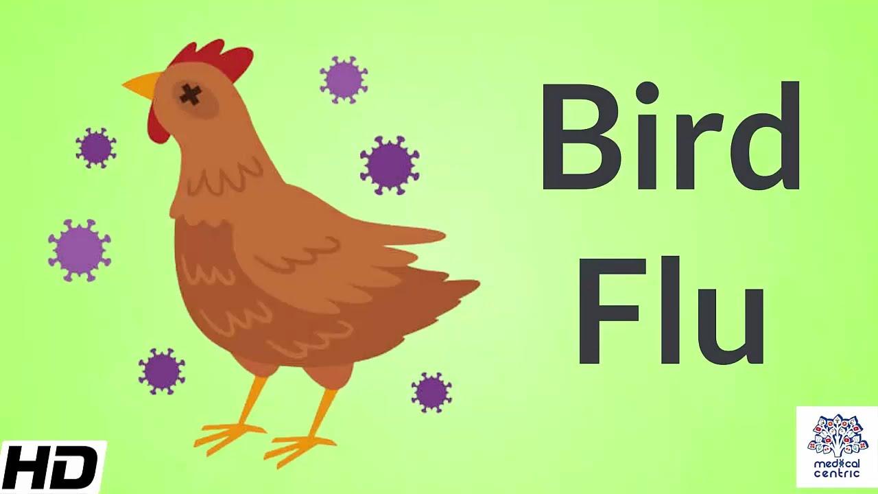 So far, low risk of human spread of H10N3 bird flu