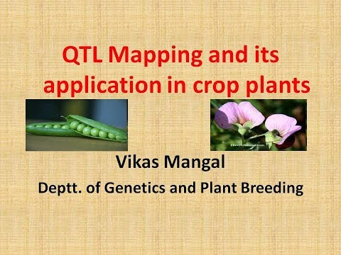 Lecture On QTL (Quantitative Trait Loci) Mapping Part 1 By Vikas Mangal