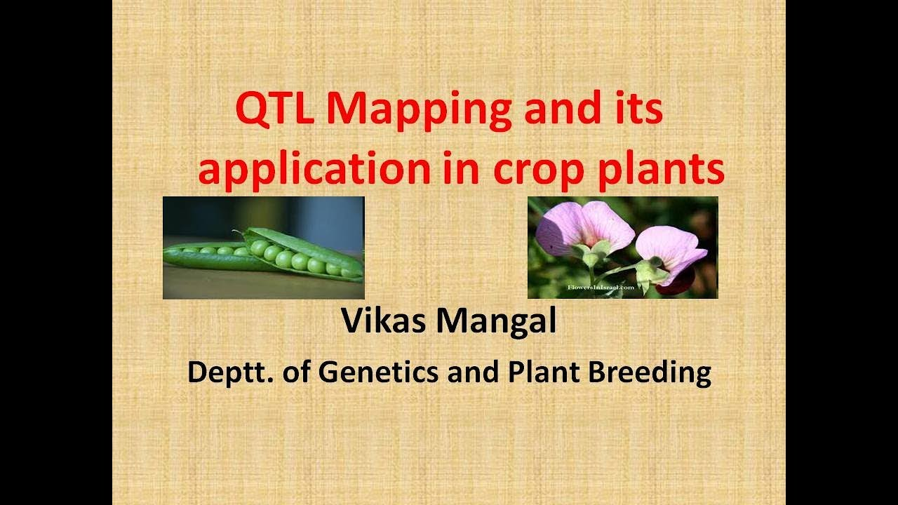 Lecture on QTL (Quanative Trait Loci) mapping part 1 by Vikas ... on