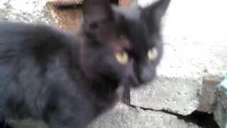 Уличный чёрный котёнок. Ласковый и очень ручной.