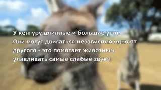 Удивительные Животные Австралии(, 2012-05-22T12:18:43.000Z)