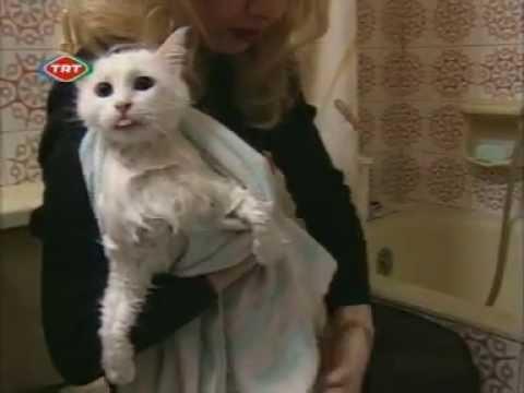 The Angora Cat - Ankara Kedisi Documentary (english)