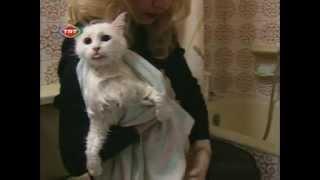 The Angora Cat  Ankara Kedisi Documentary (english)
