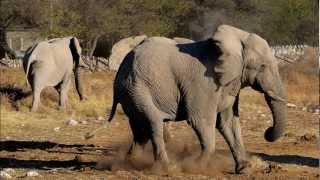 Zwierzęta Afryki cz I