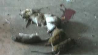 动物也疯狂之灭鼠记