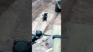 Собаки, приколы, жеская ебля