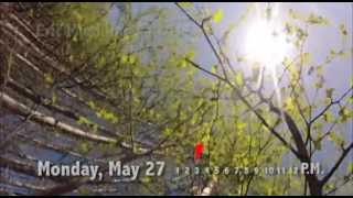 Greenup in Alaska — Three days of spring in time-lapse