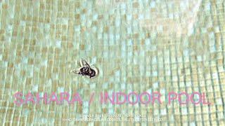 Sahara // Indoor Pool (Official Video)